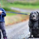 Mancare slaba pentru caini grasi